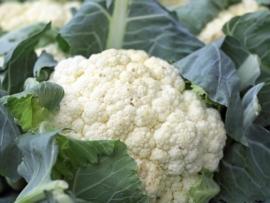 cauliflower.jpg resized