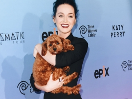 katy-perry-vegan-plant-based