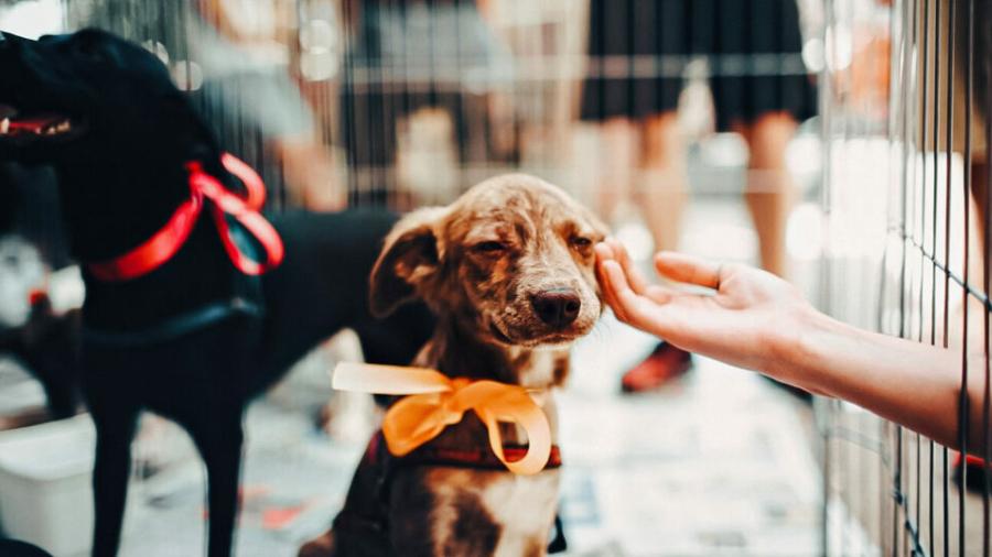new-york-pet-store-ban-1024x536
